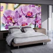 Fotomural orquideas